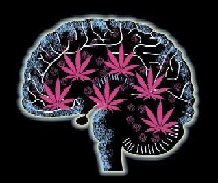 brain_on_drugs