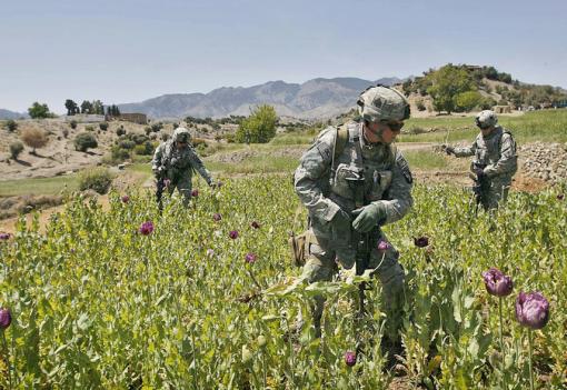 afghanistan-opium-fields