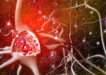 neuronen-m-synapse